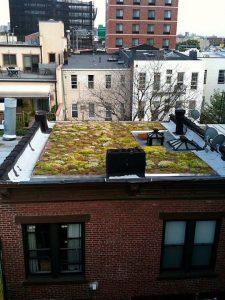 Grren Roof Installed